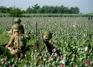 Image result for vietnam war poppy