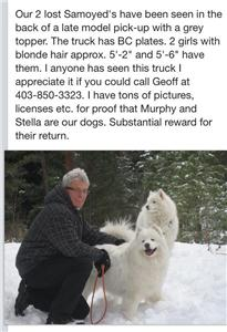 Missing Dogs